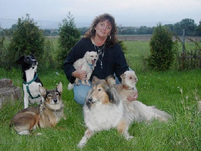 tsv hunde suchen menschen
